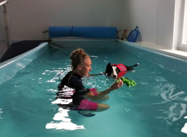 zig swim